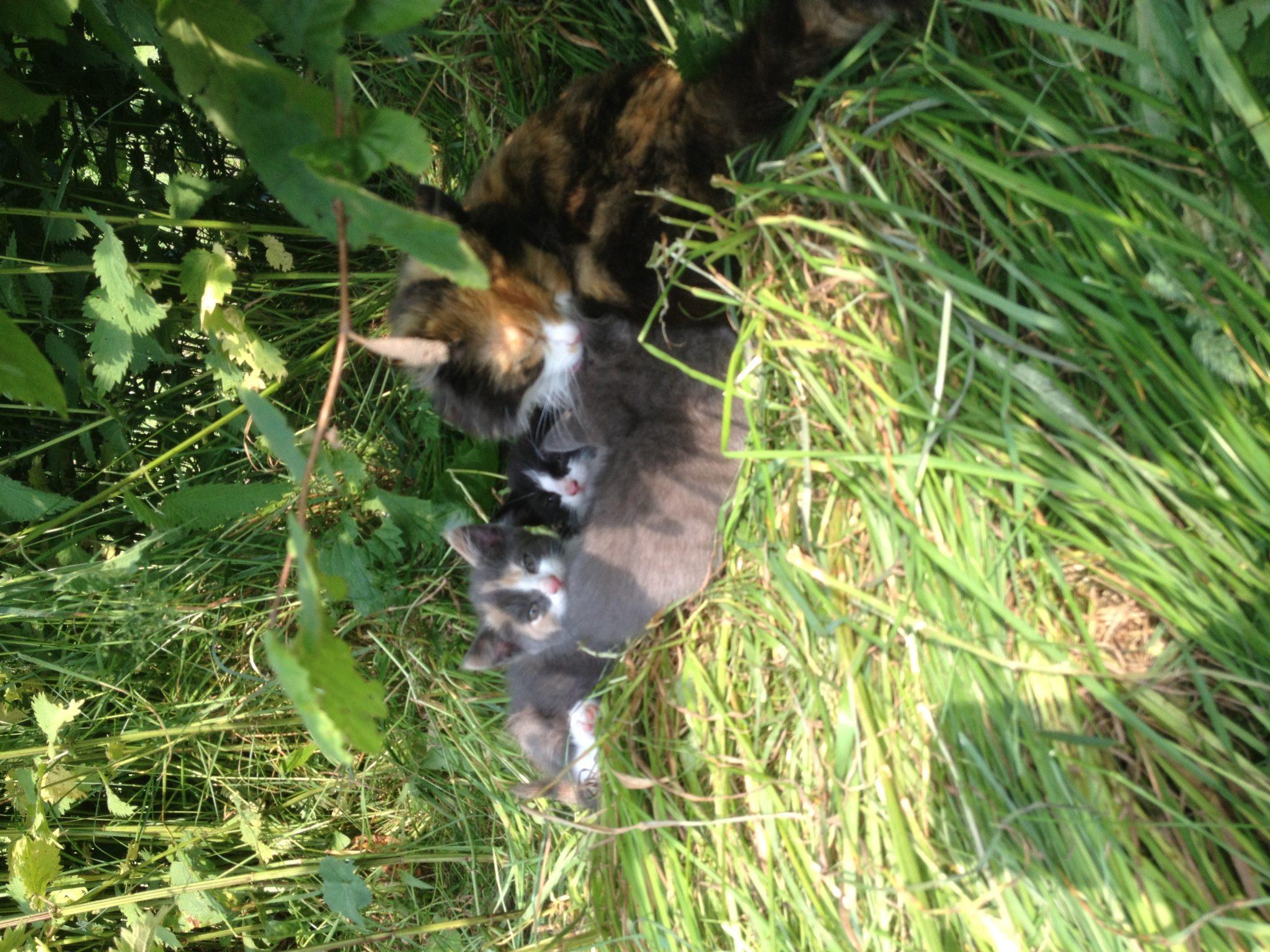 Unsere süßen Katzenbabys