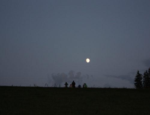Mondschein-Wanderung zur Kälbchengeburt
