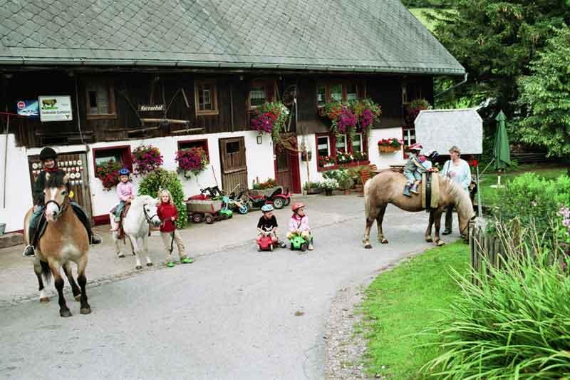 Kernenhof Pferde
