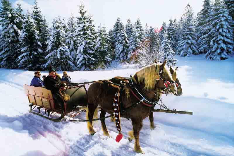 Pferdeschlitten-1
