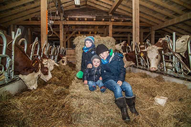 Bei den Kühen im Stall