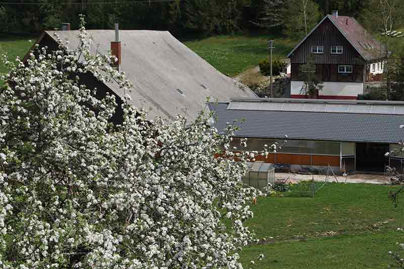 Der Kernenhof im Frühling