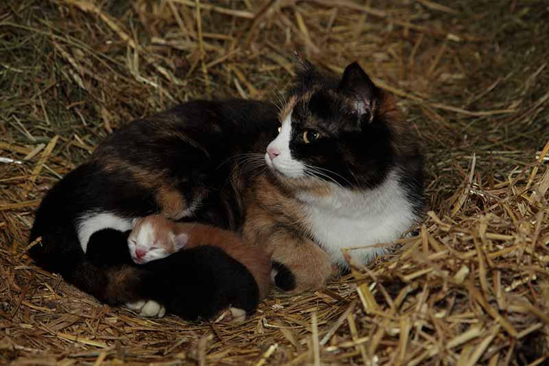 Katzenmama mit Babys
