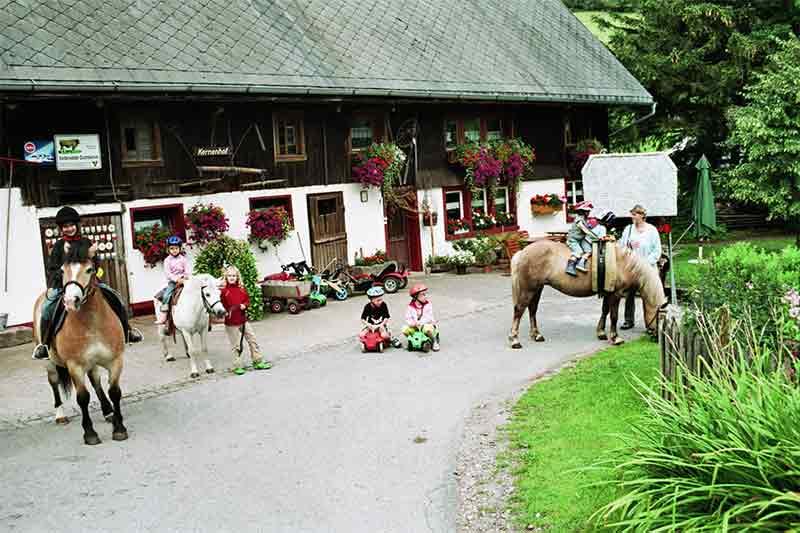 pferde-im-hof