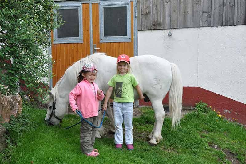 pferde-pflegen