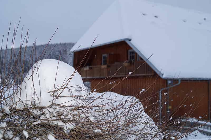 schnee-auf-dem-busch